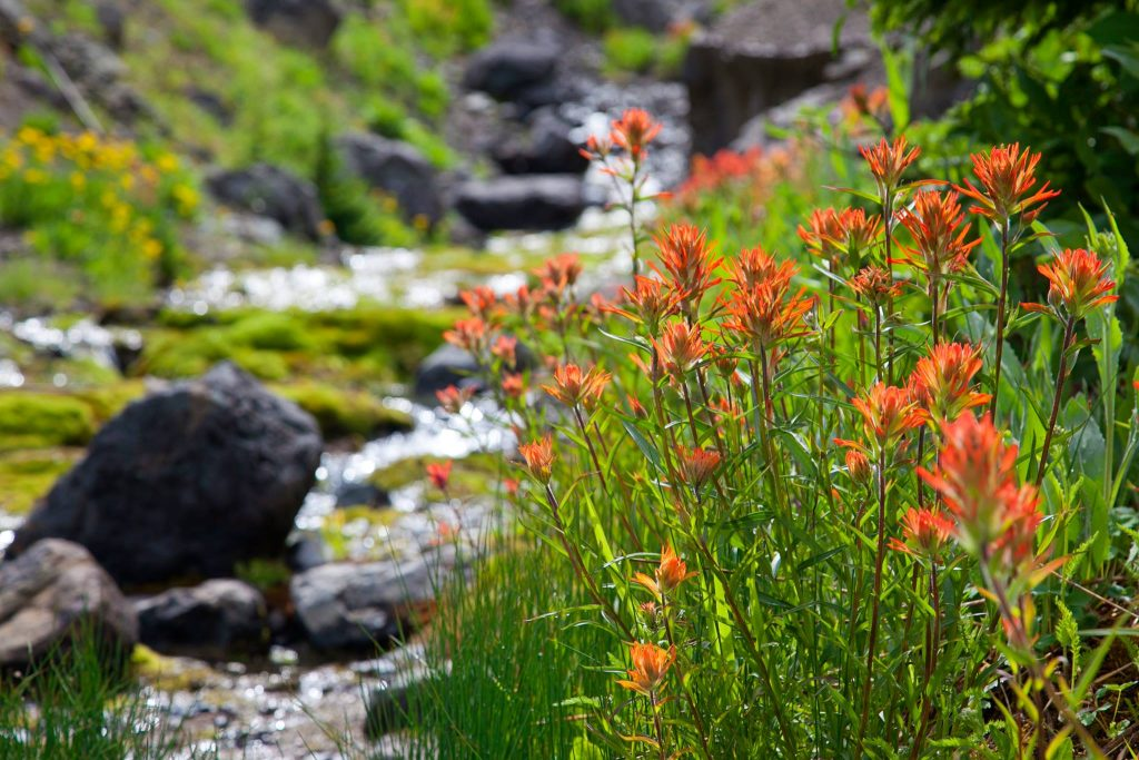 Paintbrush by creek
